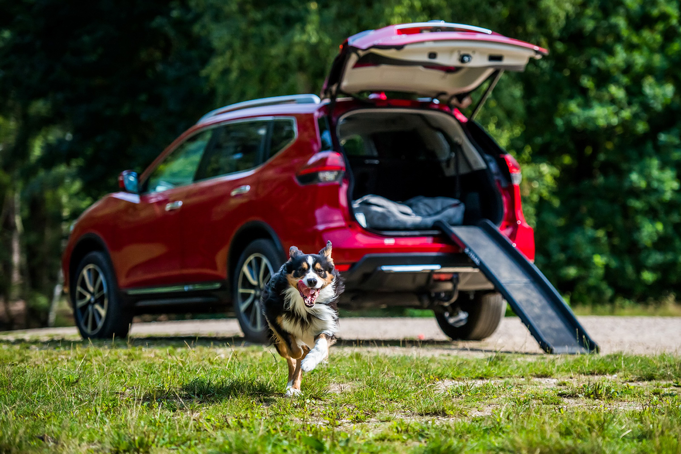 nissan-x-trail-paw-pack-edition-9.jpg